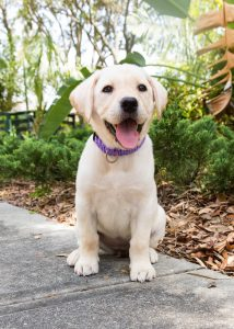 southeastern guide dogs meet and greet