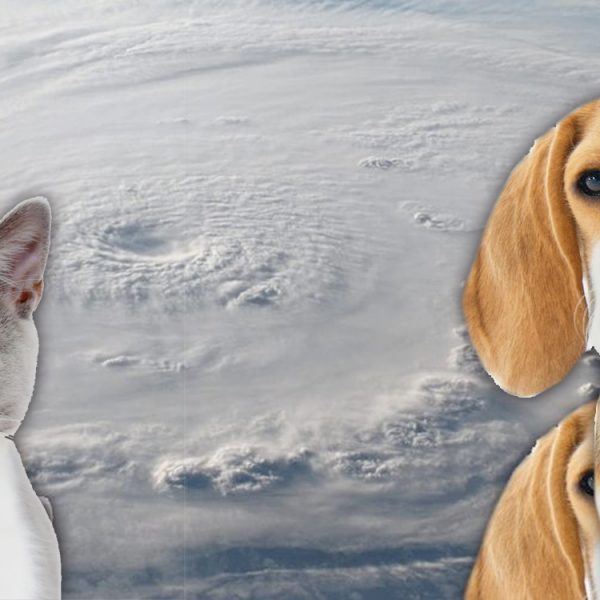 hurricane preparedness for animals