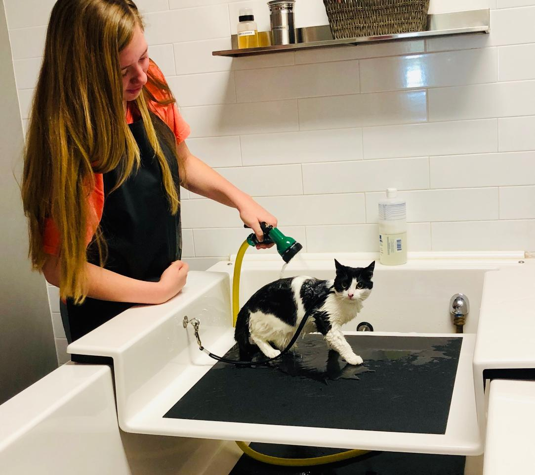 kitten self serve wash pets plus