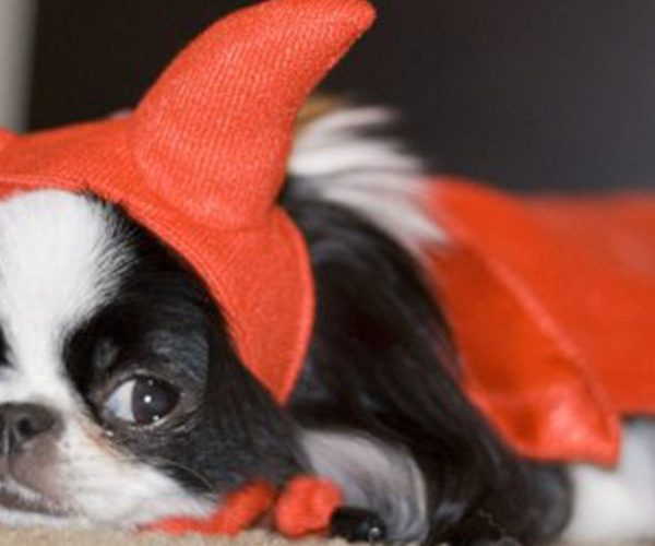 halloween dog with costume leo luckys