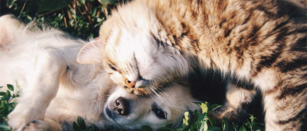 cat and dog nuzzling on grass