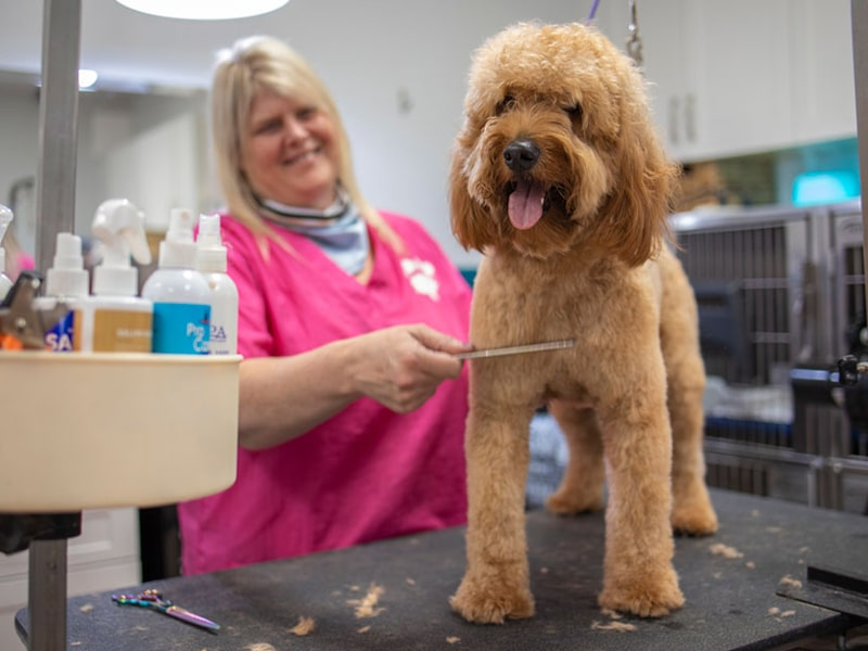 grooming at leo and luckys